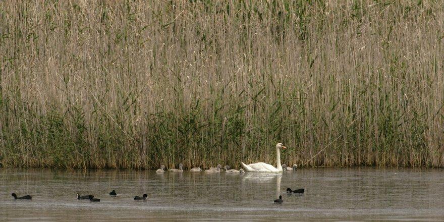 Gediz Deltası'nda baharla hareketlenen kuşların dünyası kayıt altına alınıyor
