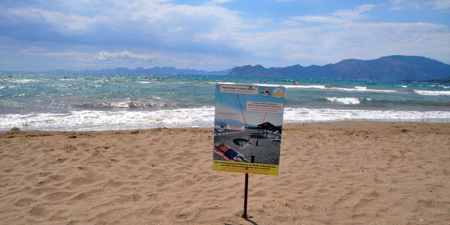 Muğla'da İztuzu Plajı'ndaki caretta caretta yuva sayısı 300'e ulaştı