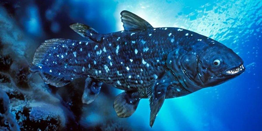Bilim insanlarından yeni balık keşfi: 'Yaşayan fosil' 100 yıl yaşıyor, hamileliği 5 yıl sürüyor