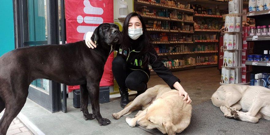 Soğuktan mağazaya sığınan köpeklere çalışanlar bakıyor