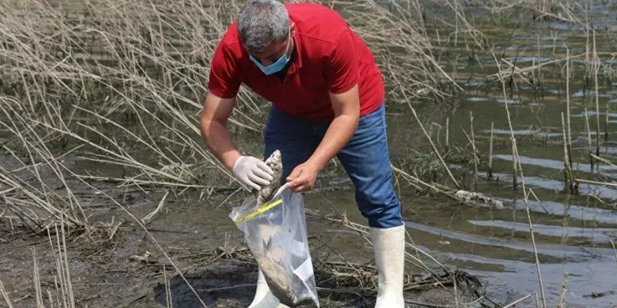 Alibeyköy Barajı'nda balık ölümleri: İnceleme başlatıldı