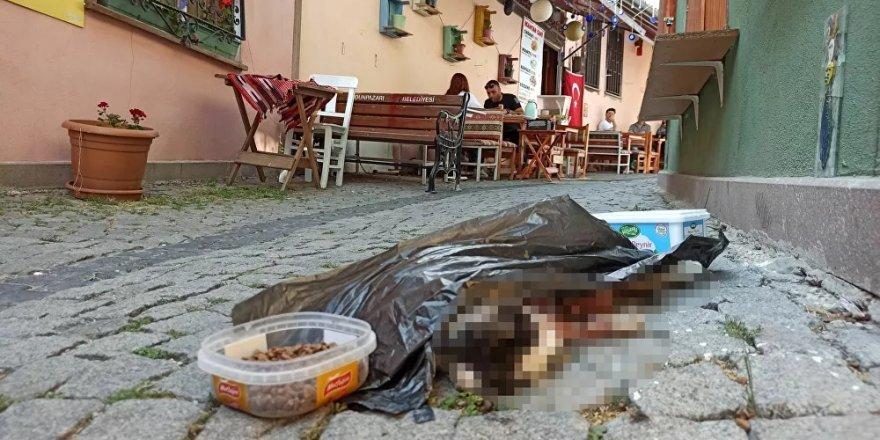 Sokak kedisini öldürüp mama kabının yanına attılar