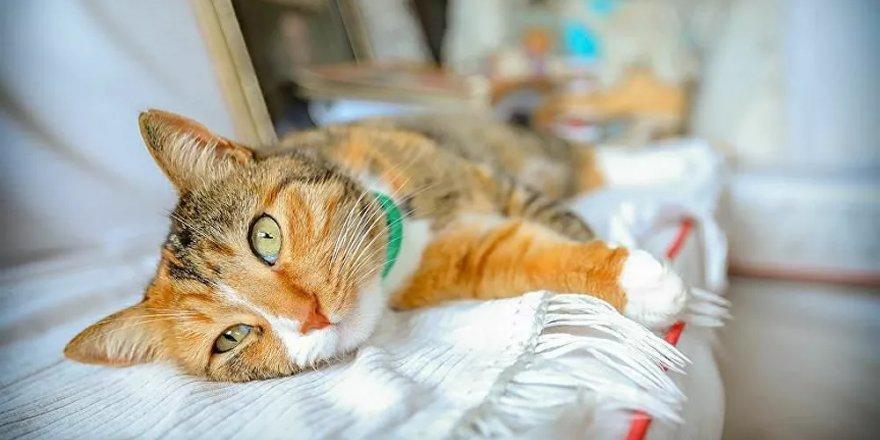 Fotoğraflarla analiz yapabilen mobil uygulama geliştirildi: Kediniz mutlu mu?