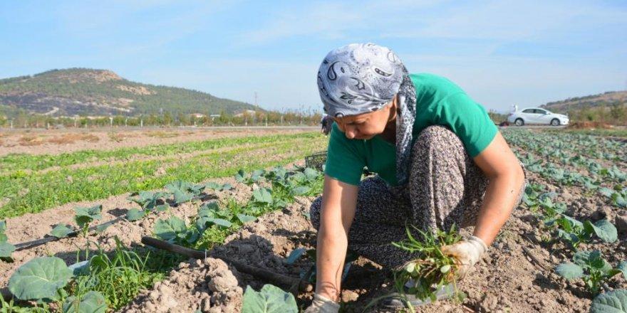 Aliağa Belediyesinden Türkiye'nin ilk toprak ve tarım atlası