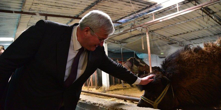Ukrayna Büyükelçisi Andrii Sybiha, Aydın'da deve çiftliğini ziyaret etti
