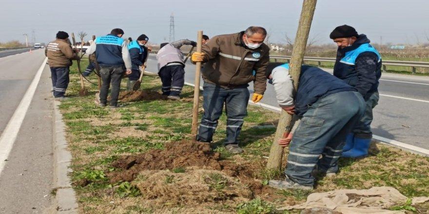 Çevre yoluna 125 yeni ağaç dikildi