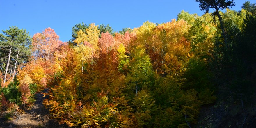 Kayak ve termali buluşturan Murat Dağı'nda sonbahar renkleri