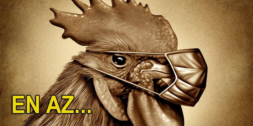 Bilim insanlarından pandemi uyarısı: En az 8 kuş gribi türü dünyada dolaşıyor