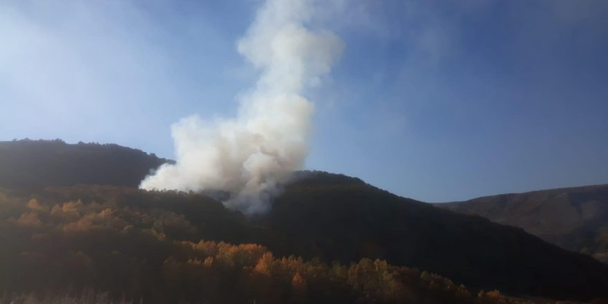 Bingöl'de çıkan orman yangını kontrol altına alındı