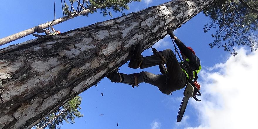 Ormanın sincap adamları ayda 15 bin TL kazanıyor