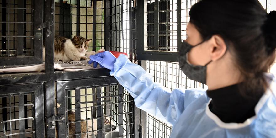 Kedilerde görülen FIP hastalığında yaşanan artış üzerine önlem