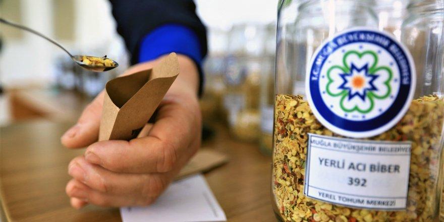 Büyükşehir, yerel tohumların dağıtımına başladı